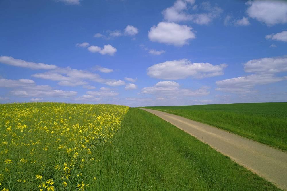 晴朗的天气草地公路