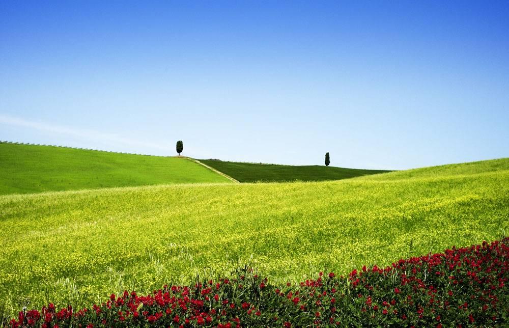 春天的草地
