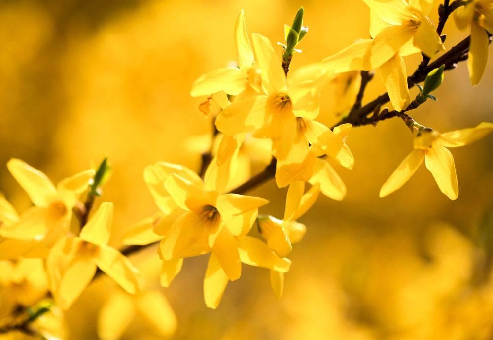 黄色的花卉植物