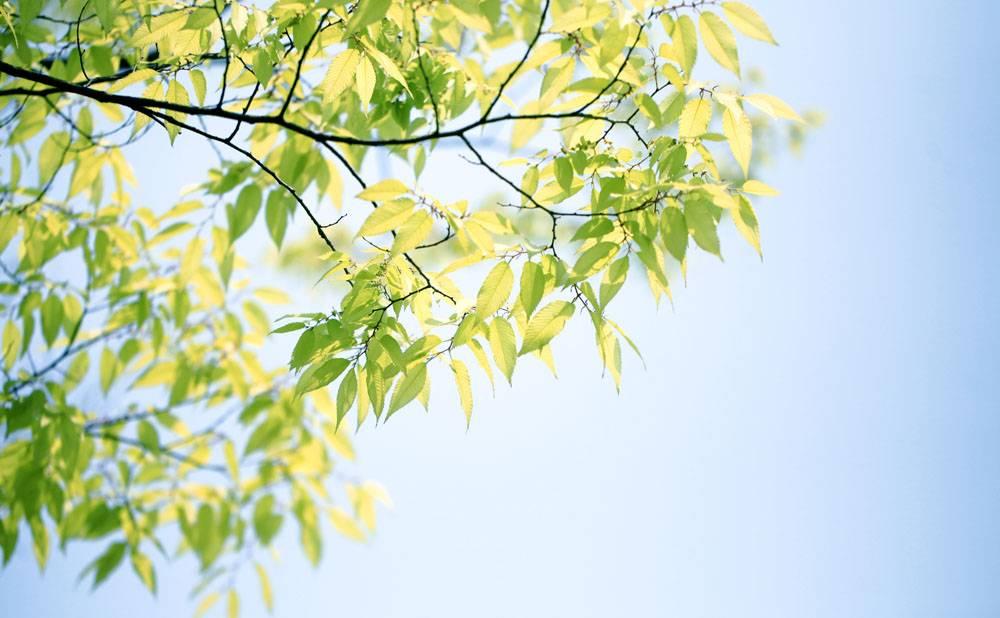 植物叶子嫩芽