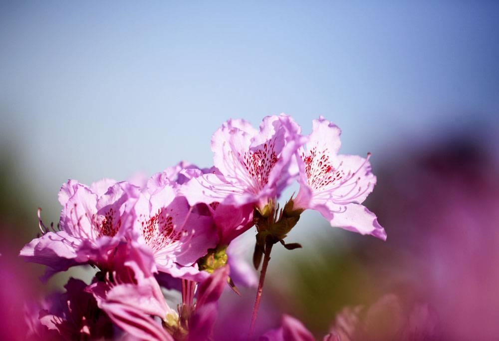 粉色盛开的花卉