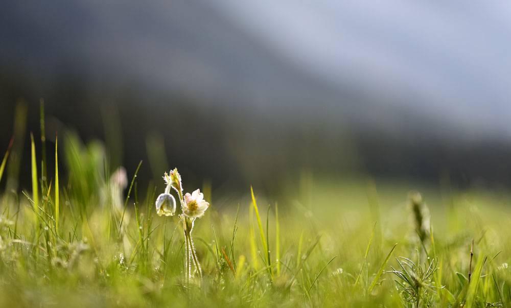 阳光朦胧嫩芽绿草