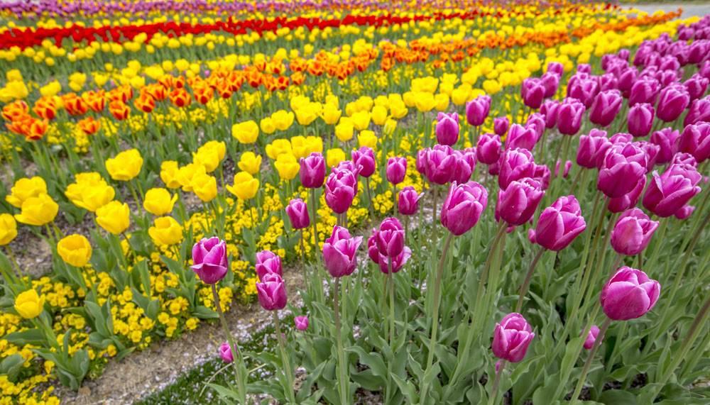多彩的鲜花