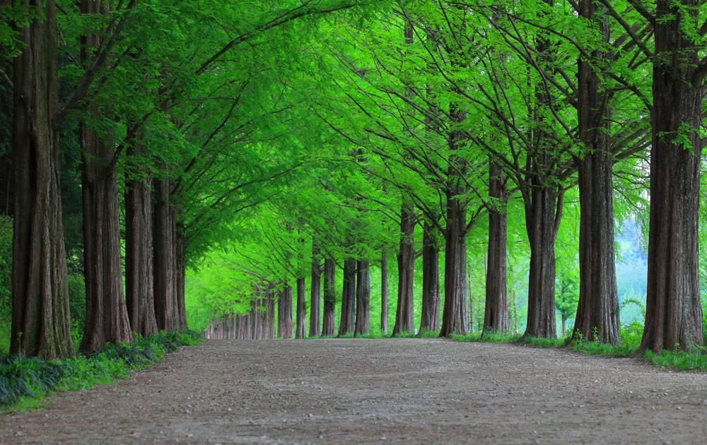 整齐的绿色生机森林树木道路