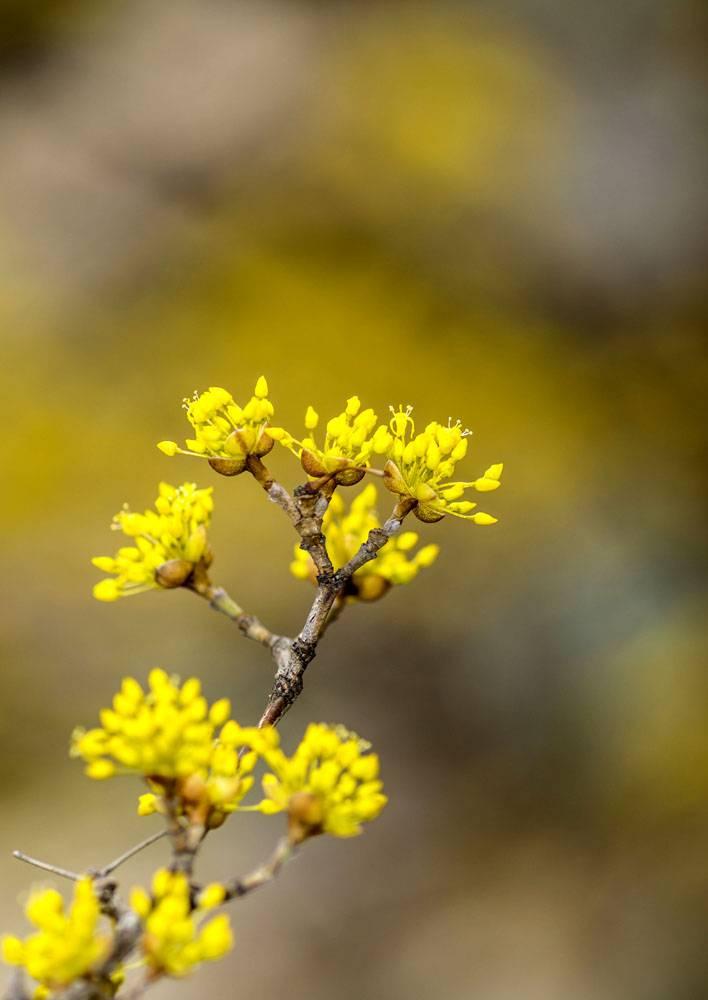 树枝上的黄色花卉