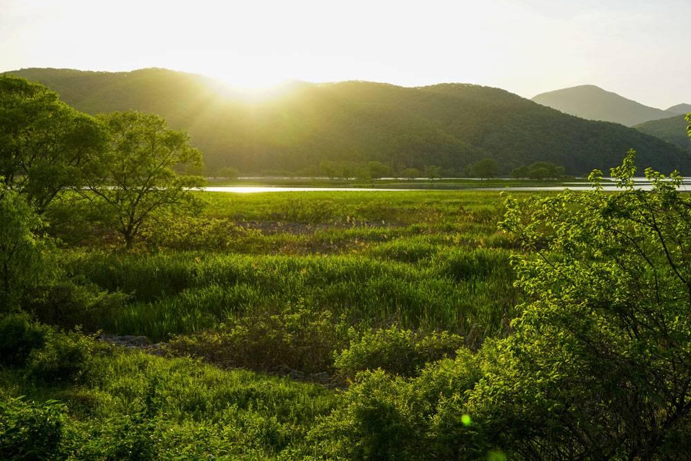 阳光绿色草地湖岸