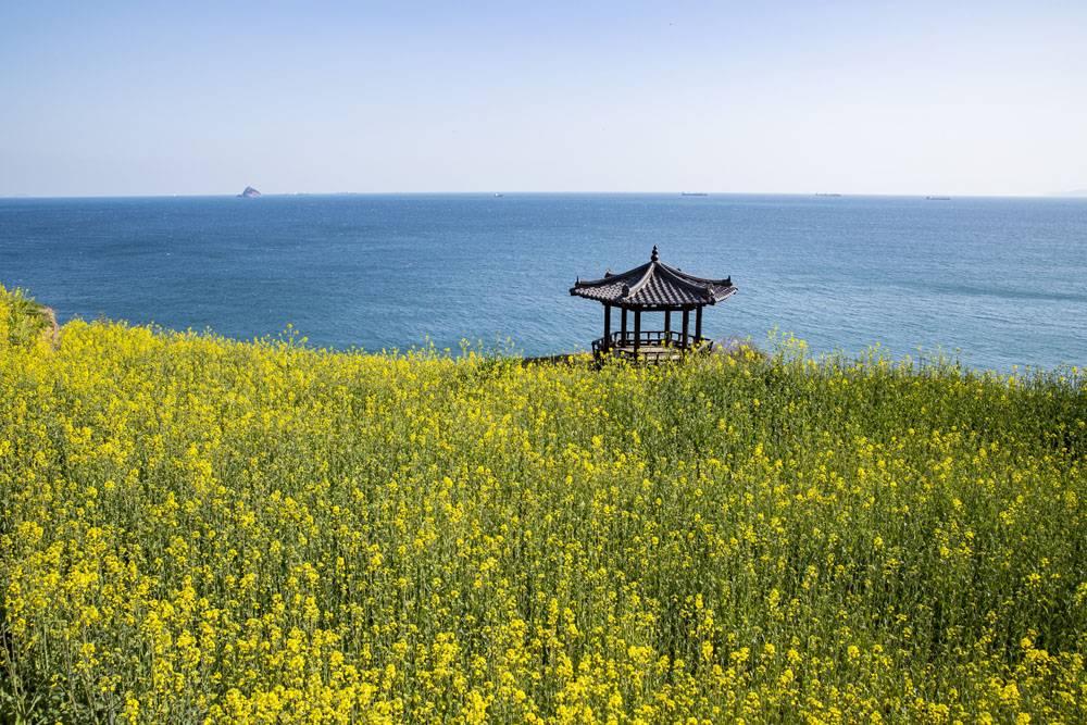 海岸的油菜花田与亭子