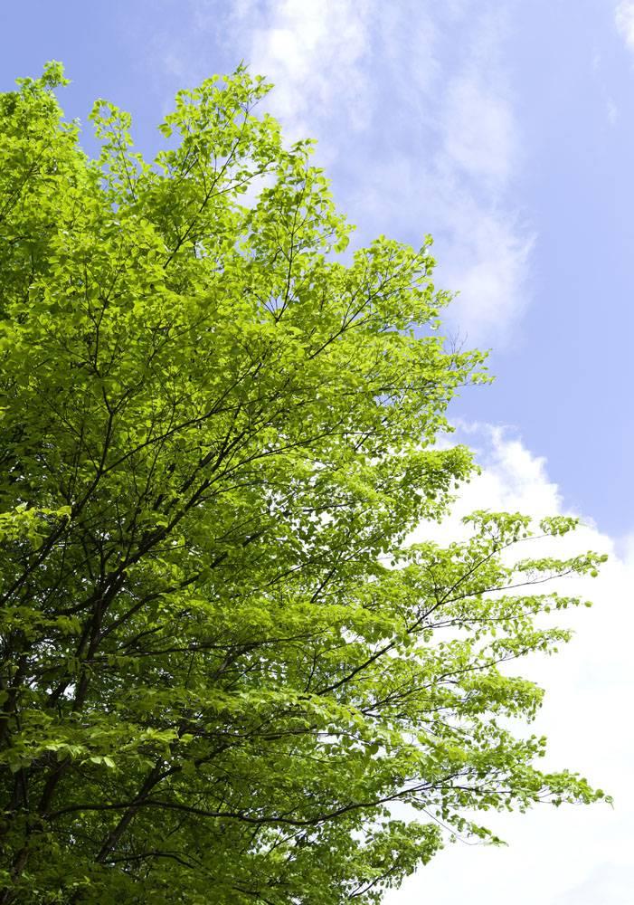 春天长出嫩芽的树