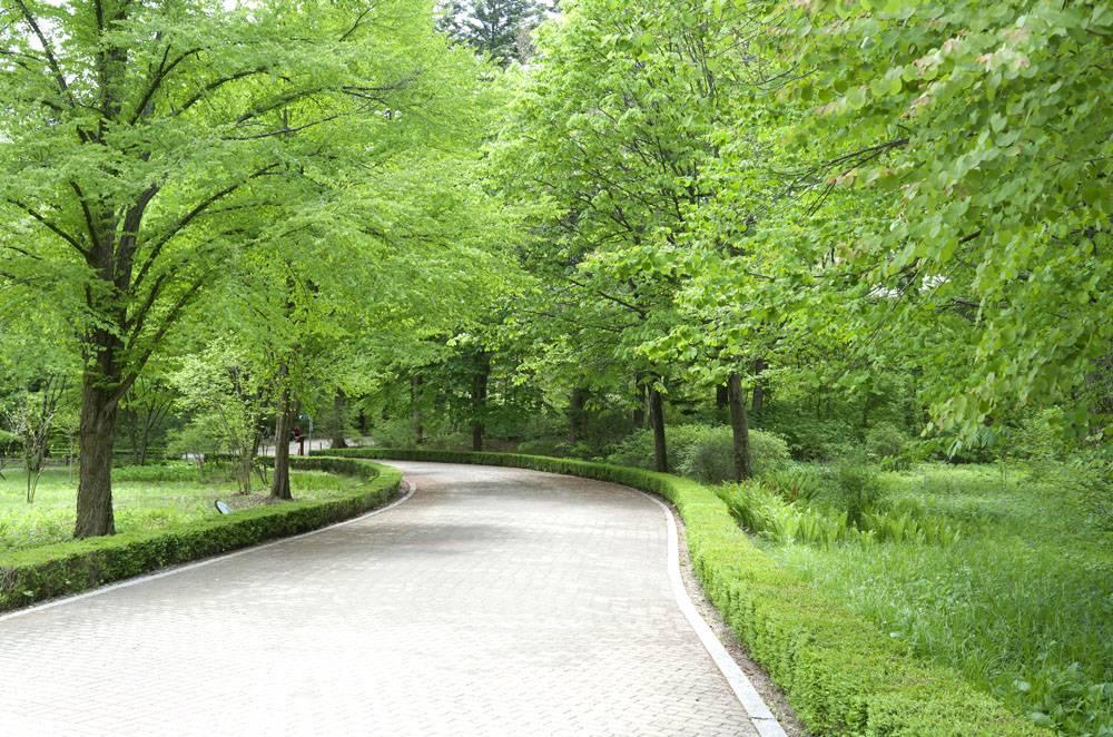 绿色森林公路道路