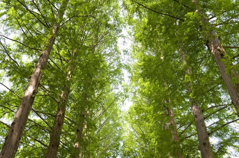 阳光下春天的森林