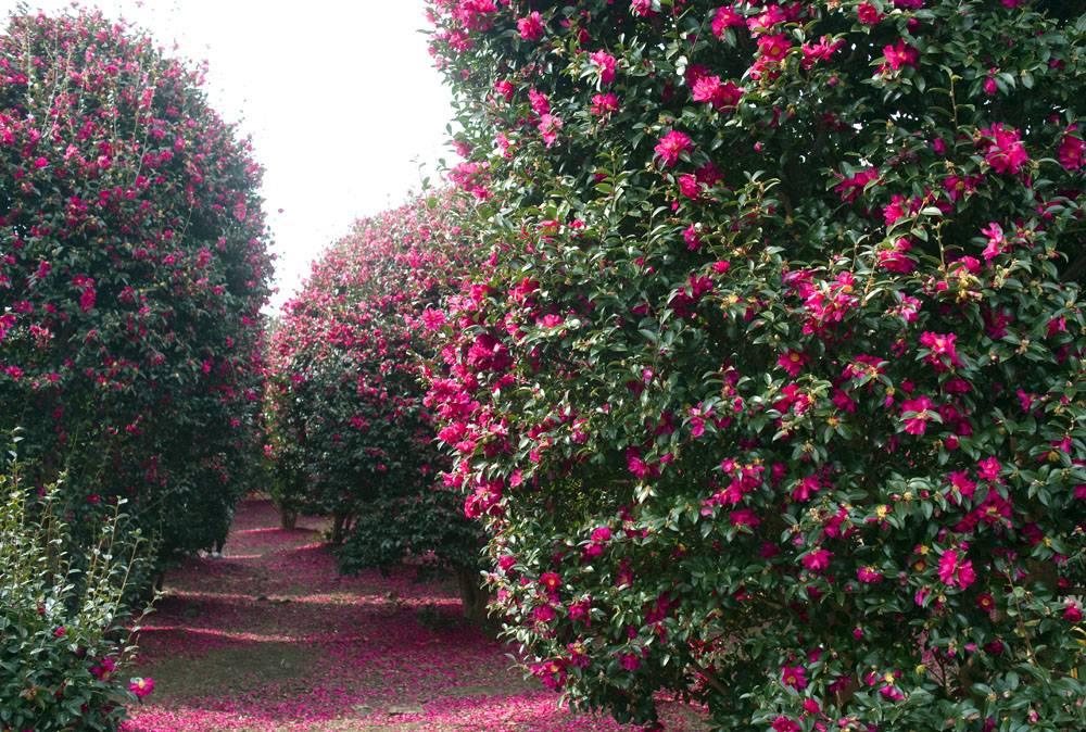 粉色公园花卉