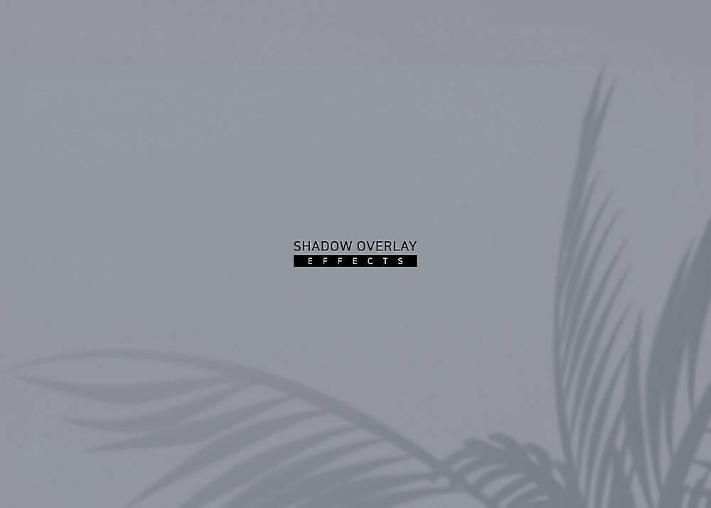 极简纯色植物叶子阳光投影背景设计
